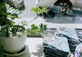 Grünpflanze neben Jeans