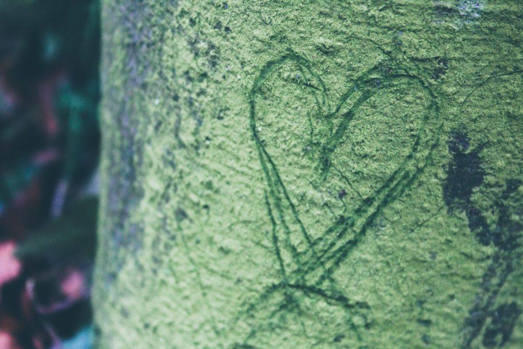 Herz in Baum geritzt